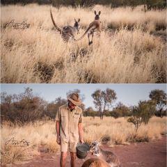 The Kangaroo Sanctuary User Photo