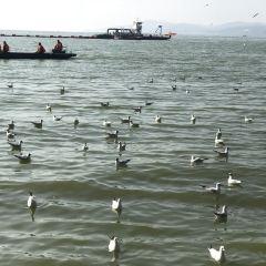 滇池觀鳥用戶圖片
