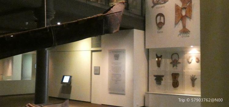 南澳大利亞博物館2
