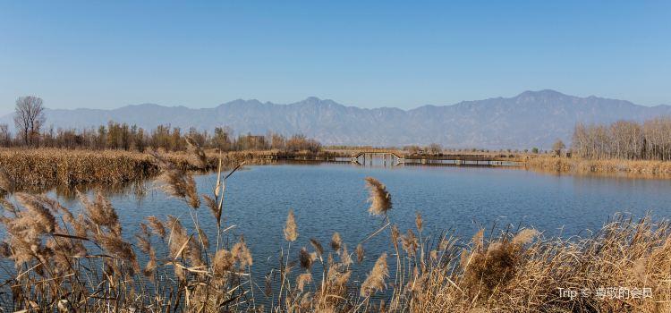 Beijing Wild Duck Lake National Wetland Park3