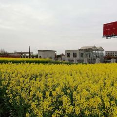 Tianhan Silk Road Ocean of Flowers User Photo