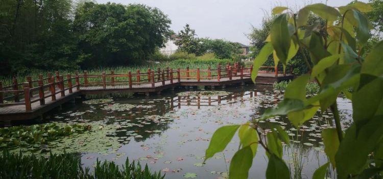 龍池山自行車公園2