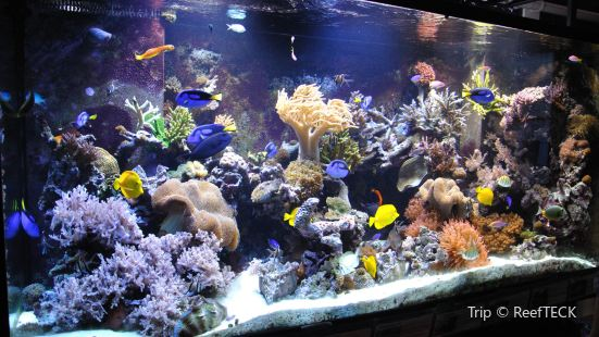 Woods Hole Science Aquarium