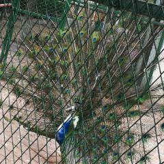 Weifang Zoo User Photo