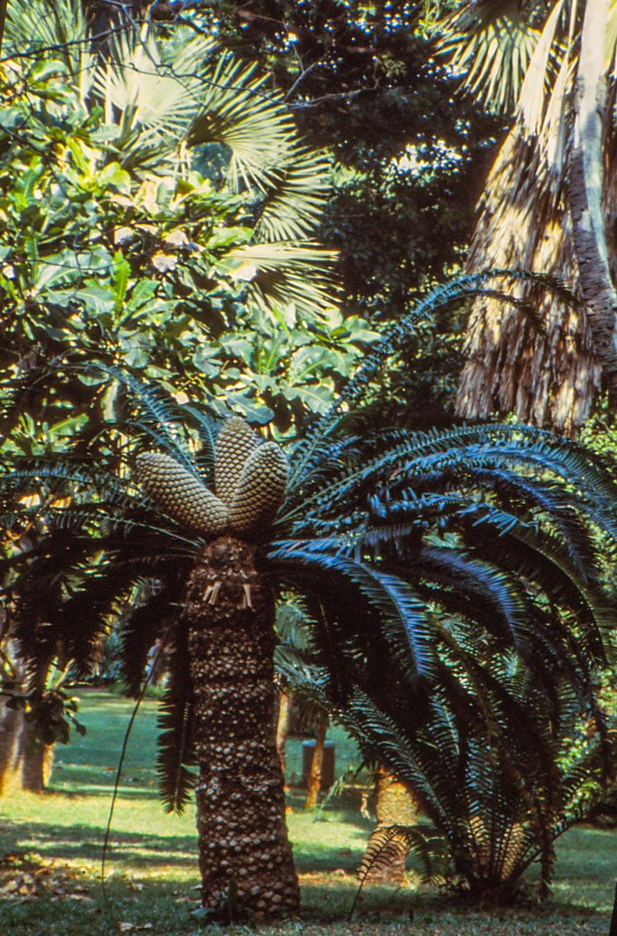Durban Botanical Gardens
