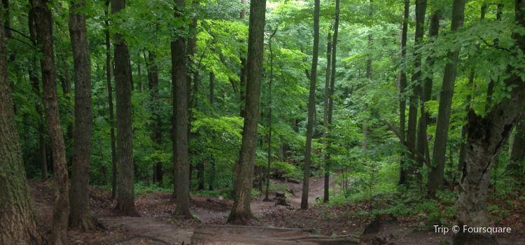 Thornton Bales Conservation Area3