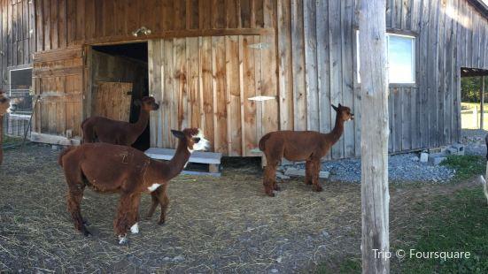 Home Again Alpaca Farm