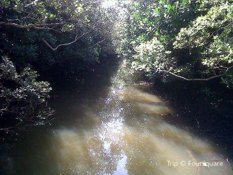 Beachwood Mangroves Nature Reserve