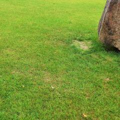 線型藝術公園用戶圖片