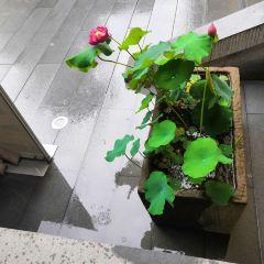 요코하마 타이칸 기념관 여행 사진