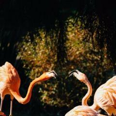 科隆動物園用戶圖片