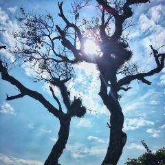 嶺南印象園用戶圖片