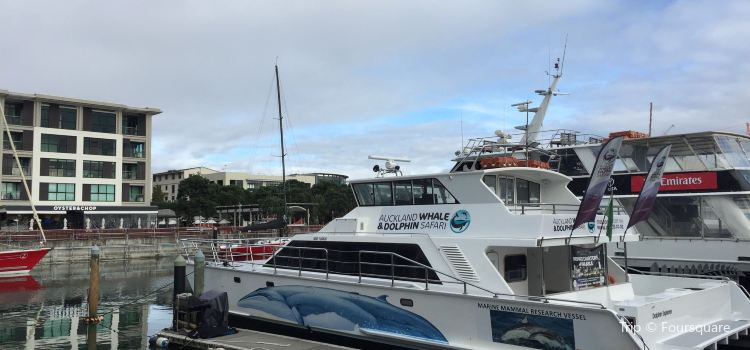 Auckland Whale & Dolphin Tour3