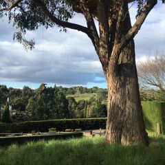 Mornington Park User Photo