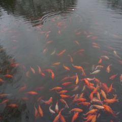 花港觀魚用戶圖片