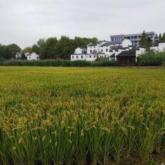 周村農家樂用戶圖片