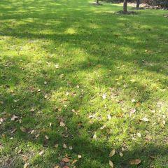 Tauranga Memorial Park用戶圖片