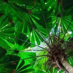 Gold Coast Regional Botanic Gardens User Photo