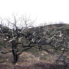 Daguishan National Forest Park User Photo
