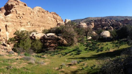 Al Qala'a Trail