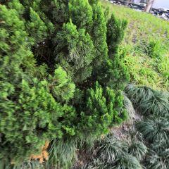珠山公園用戶圖片