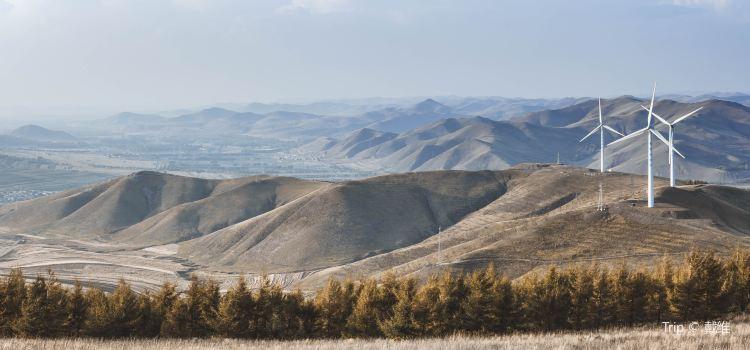 Bashang Grasslands2