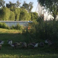 Luoma Lake Wetland User Photo