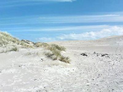 Råbjerg Mile 沙漠