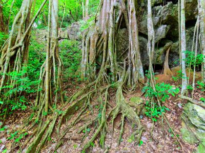 Xishuangbanna Primeval Forest Park
