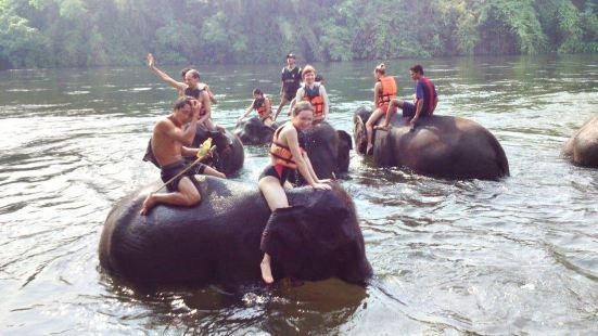 Taweechai Elephant Camp