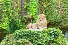 迈阿密动物园-迈阿密-doris圈圈