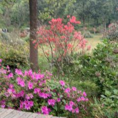 Hunan Forestry Botanical Garden User Photo