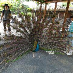 Tennoji Zoo User Photo