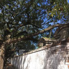 Lafayette Cemetery No.1 User Photo
