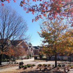 Auburn University User Photo
