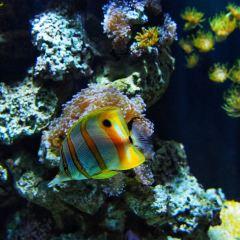 Sea Life User Photo