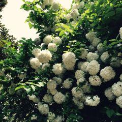 紫鳳公園用戶圖片