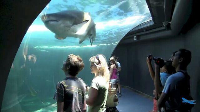 兩大洋水族館