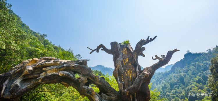 浙江龍湾潭国家森林公園