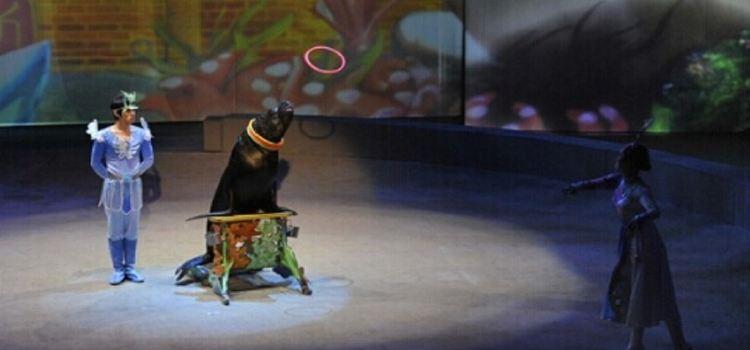 Happy Circus Theater2