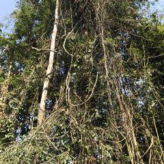 Xishuangbanna Tropical Rainforest Nature Reserve User Photo