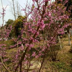 Saidianchi Cemetery User Photo