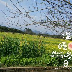 Tangjiawan Rapeseed Flower Field User Photo