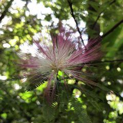 Cairns Botanic Gardens User Photo