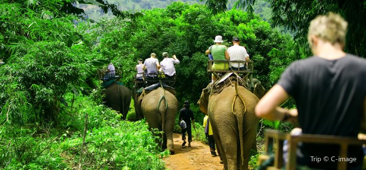 Nosey Parker's  Elephant Camp - Elephant rides in the forest