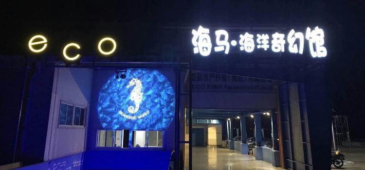 Hippocampus Fantasy Aquarium2