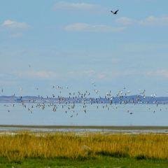 巴裡坤湖用戶圖片