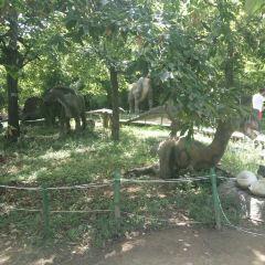 Qinling Wildlife Park User Photo