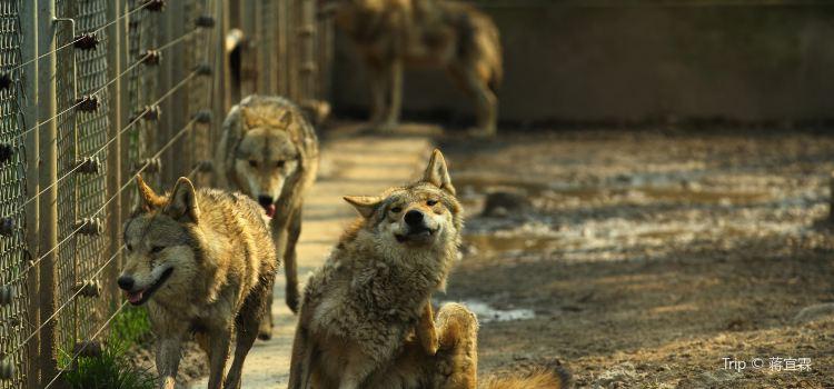上海野生動物園