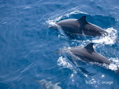 Bohol Dolphin Discoveries